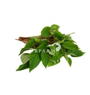 Rau đay hữu cơ EM Green