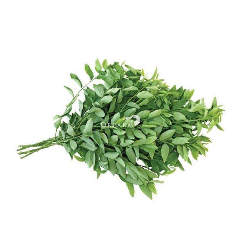 Rau ngót hữu cơ EM Green