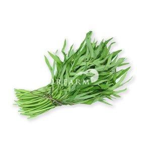 Rau muống hữu cơ EM Green