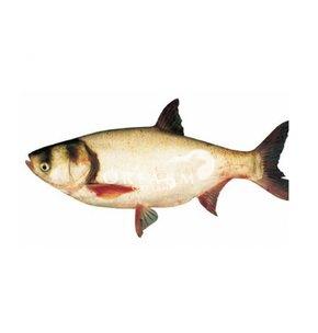 Cá mè cắt khúc loại 10-15 kg